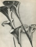 Lot #666: MAN RAY - Calla Lilies - Original vintage photogravure