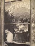 Lot #656: BRASSAI [gyula halasz] - Chat blanc de l'epicerie - Original vintage photogravure
