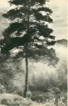Lot #672: CHIN-SAN LONG [lang jingshan/lang ching-shan] - Brouillard du matin - Original vintage photogravure
