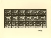 Lot #1561: EADWEARD MUYBRIDGE - Trotting Horse with Sulky - Original photogravure