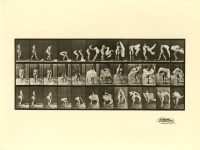 Lot #13: EADWEARD MUYBRIDGE - Woman Throwing a Shawl on Her Shoulders - Original photogravure
