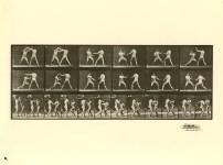 Lot #1875: EADWEARD MUYBRIDGE - Men Boxing - Original photogravure