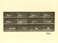 Lot #2092: EADWEARD MUYBRIDGE [d'apres] - Dogs Fighting - Original photogravure