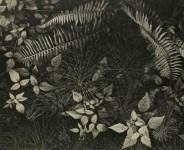Lot #1923: ANSEL ADAMS - Leaves & Ferns, Mills College, Oakland, California - Original vintage photogravure