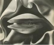 Lot #894: RUTH BERNHARD - Shell in Silk - Original vintage photoengraving