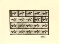 Lot #1960: EADWEARD MUYBRIDGE [d'apres] - Jockey on Galloping Horse (The Horse in Motion) - Original photogravure
