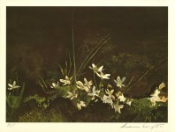 Lot #1877: ANDREW WYETH - May Day - Color offset lithograph