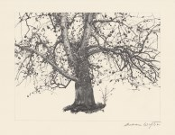 Lot #1825: ANDREW WYETH - New Leaves - Offset lithograph