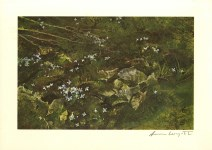Lot #1738: ANDREW WYETH - Quaker Ladies - Color offset lithograph