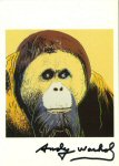 Lot #1016: ANDY WARHOL - Orangutan - Color offset lithograph