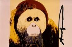 Lot #285: ANDY WARHOL - Orangutan - Original color analogue photograph