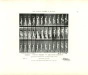 Lot #1504: EADWEARD MUYBRIDGE - Woman: Turning around and Ascending Stairway - Original photomezzotint & letterpress
