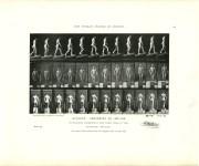 Lot #723: EADWEARD MUYBRIDGE - Athlete: Ascending an Incline - Original photomezzotint & letterpress