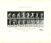 Lot #2205: EADWEARD MUYBRIDGE - Athlete: Catching and Throwing at Base-Ball - Original photomezzotint & letterpress