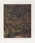 Lot #70: LUCIAN FREUD - Two Plants - Color offset lithograph