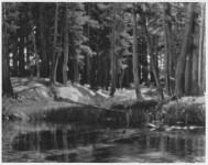 Lot #2011: ANSEL ADAMS - Grove, Lyell Fork, Merced River, California - Original photogravure