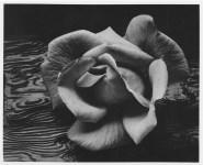 Lot #206: ANSEL ADAMS - Rose and Driftwood, San Francisco, California - Original photogravure