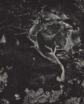 Lot #1336: EDWARD WESTON - Cypress, Rock, Stone Crop, Point Lobos - Original photogravure