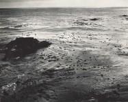 Lot #908: EDWARD WESTON - Sea and Kelp - Original photogravure