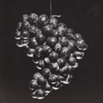 Lot #1244: ROBERT MAPPLETHORPE - Grapes - Original vintage photogravure
