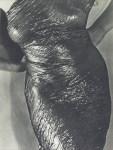 Lot #737: MAN RAY - Anatomy - Original vintage photogravure