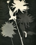 Lot #1727: MAN RAY - Rayograph - 092 - Original vintage photogravure